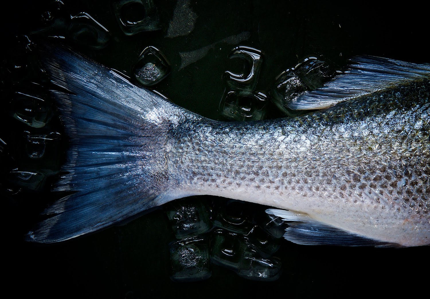 Photo of a fish tail
