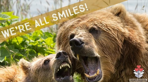 Smiling grizzly bears image